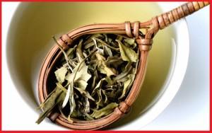 manfaat teh putih bagi kesehatan