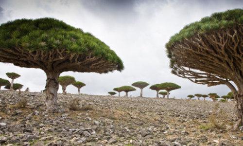 Socotra Yaman