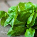 5 Manfaat Daun Basil untuk Kesehatan